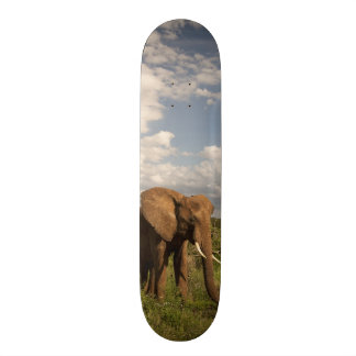 Afrikanischer Elefant, Loxodonta africana, heraus Individuelle Skateboarddecks