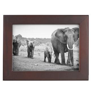 Afrikanischer Elefant u. Kälber | Kenia, Afrika Erinnerungsdose