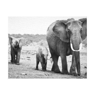 Afrikanischer Elefant u. Kälber | Kenia, Afrika Leinwanddruck