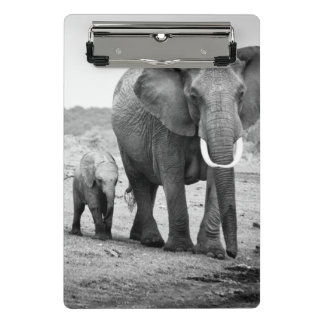 Afrikanischer Elefant u. Kälber | Kenia, Afrika Mini Klemmbrett