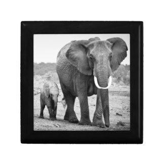 Afrikanischer Elefant u. Kälber | Kenia, Afrika Schmuckschachtel