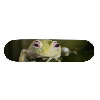 Afrikanischer Glasfrosch, Hyperolius viridiflavus, Personalisierte Skateboards