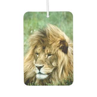 Afrikanischer Löwe Autolufterfrischer