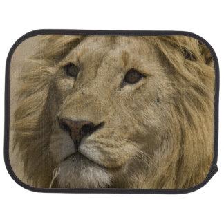 Afrikanischer Löwe, Panthera Löwe, Porträt von a Automatte