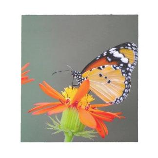 Afrikanischer Monarchschmetterling auf orange Notizblock