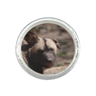 Afrikanischer wilder Hund Foto Ring