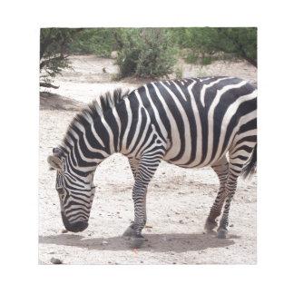 Afrikanischer Zebra am Zoo Notizblock