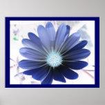 Afrikanisches Gänseblümchen-glühende Blaupause Posterdrucke