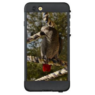 Afrikanisches Grau des Kongos auf einem Schwingen LifeProof NÜÜD iPhone 6 Plus Hülle