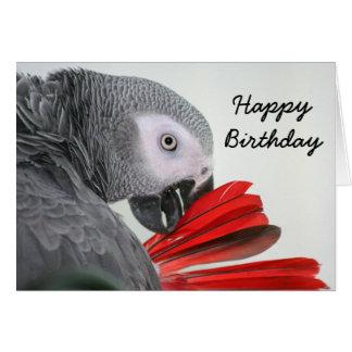 Afrikanisches Grau-Grau-Papagei des Karte