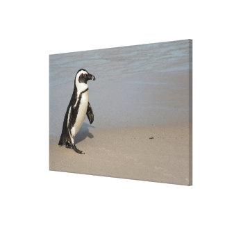 Afrikanisches Pinguin-Gehen Leinwanddruck