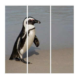 Afrikanisches Pinguin-Gehen Triptychon
