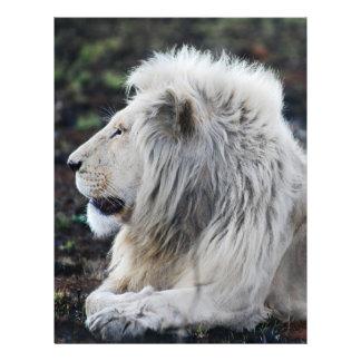 Afrikanisches weißes Löwe-Profil-Foto Flyer