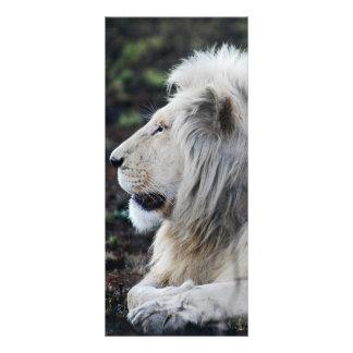 Afrikanisches weißes Löwe-Profil-Foto Werbekarte