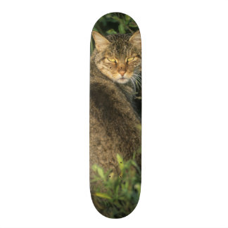 Afrikanisches wildes Katze, Felis libyca), Vorfahr Personalisierte Skateboarddecks
