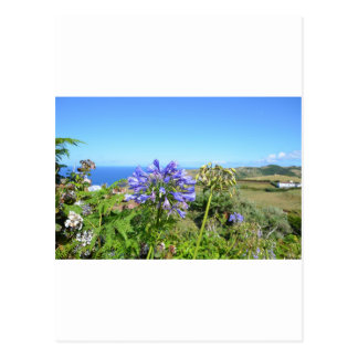 Agapanthus in den Azoren Postkarte