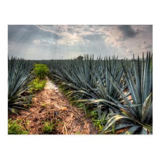 Agave Tequilana Postkarte
