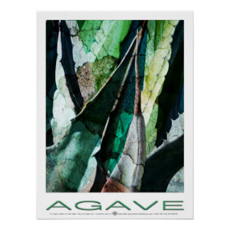 Agaven-Dorn Grenstone Poster