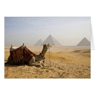 Ägypten, Kairo. Ein einziges Kamel starrt über an Karte