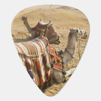 Ägypten, Kairo. Stillstehendes Kamelanstarren über Plektron