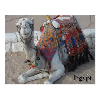 Ägypten-Kamel Postkarte