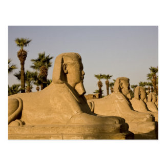 Ägypten, Luxor. Die Allee der Sphinxe führt zu Postkarte