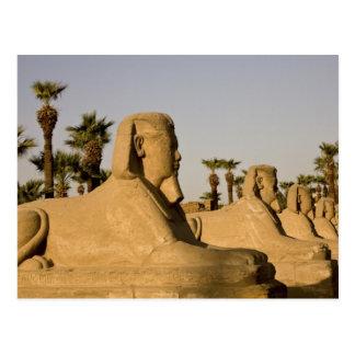 Ägypten, Luxor. Die Allee der Sphinxe führt zu Postkarten