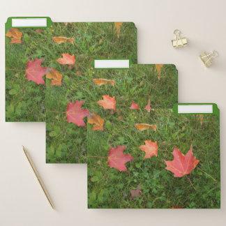 Ahorn-Blätter auf dem Boden Papiermappe