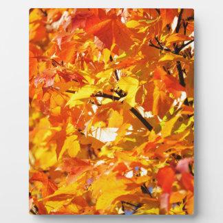 Ahornbaum-Herbst-Blätter Fotoplatte