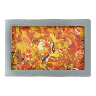 Ahornbaum-Herbst-Blätter Rechteckige Gürtelschnallen