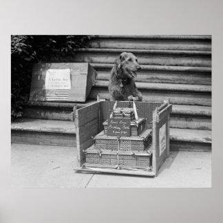Airedales Terrier, 1922 Präsidenten-Hardings Plakate