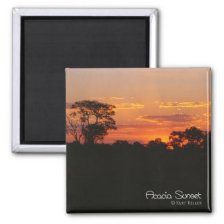 Akazien-Sonnenuntergang Quadratischer Magnet