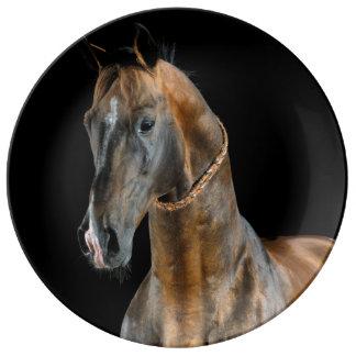 Akhal-Teke Pferd Teller