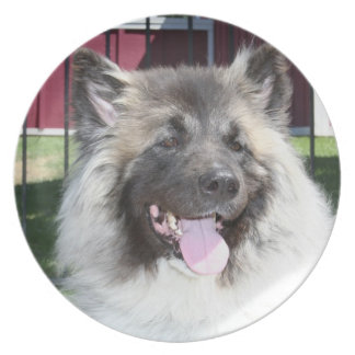 Akita-Hund Teller