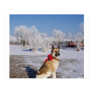 Akita in snow.png postkarte
