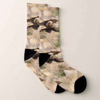 Ala Aldabra Socken