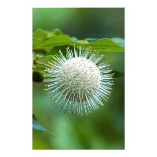 Alabama-Knopf-Bush-Wildblume Briefpapier