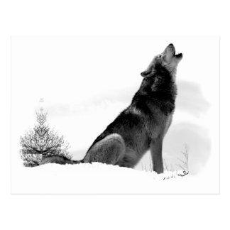 Alaskische Timberwolf-Postkarte Postkarte