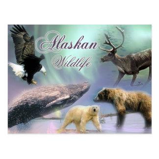 Alaskische wild lebende Tiere Postkarte