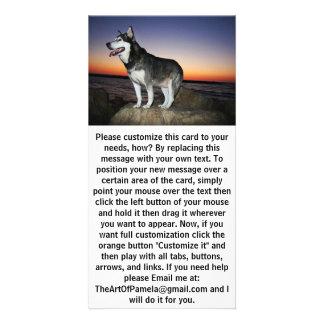 Alaskischer Malamute-Hund am Sonnenuntergang Karte