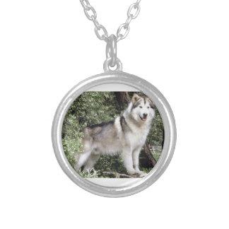 Alaskischer Malamute-Hund Versilberte Kette