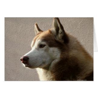 Alaskischer Malamute-Hundephotographie Karte