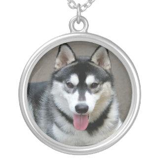 Alaskischer Malamute-Hundephotographie Versilberte Kette