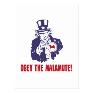 Alaskischer Malamute Postkarte