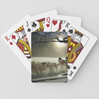 Alaskisches heiseres Hundeschlitten-Rennen Spielkarten