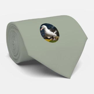 Albatros-Stand an der Spitze der Seeklippe Krawatte