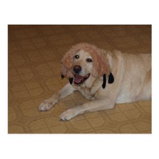 Alberner gelber Labrador Postkarte