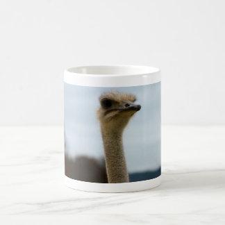Albernes Vogel-Foto| Ostrich-Gesichts-Tier-Foto Kaffeetasse