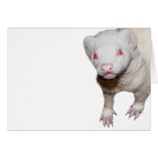 Albino-Frettchen-Bild Karte