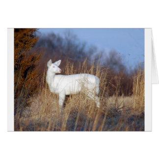 Albino Karte